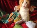 """Es gibt gute und schlechte Geheimnisse: Katze Kim mit """"Geheimnissäckchen"""" (c Petze 2017, Foto: Sandra Strobler)"""